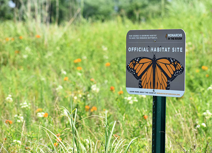 A monarch butterfly haven at Coyote Run Golf Course, one of Dave Ward's initiatives while superintendent. (Chronicle file photo)
