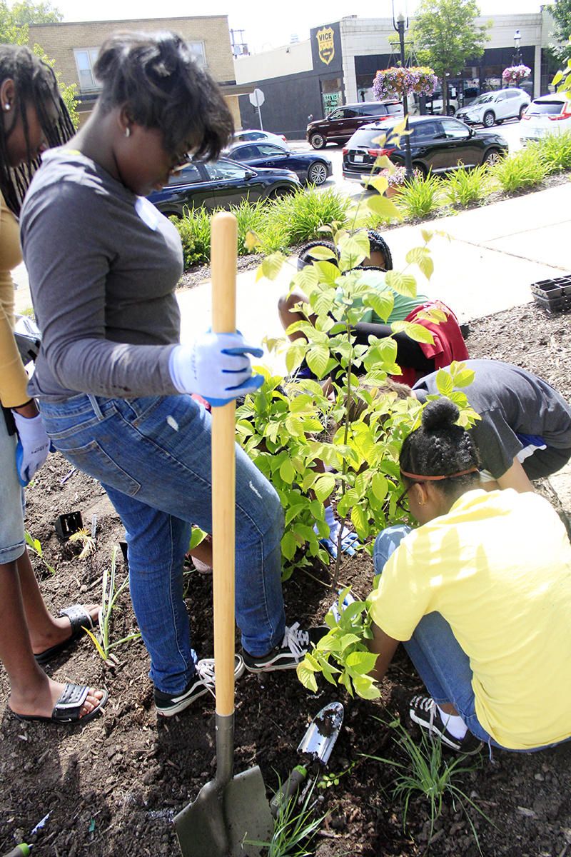 """Members of the Homewood Science Center's conservation ecology internship plant an ironwood tree they dubbed """"Tony"""" in honor of Tony Stark, aka Ironman in the Avengers comics and movies. (Eric Crump/H-F Chronicle)"""