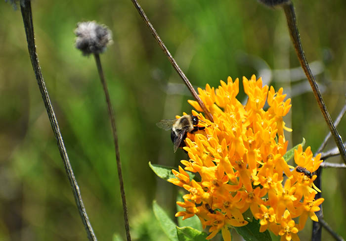 While superintendent of Coyote Run Golf Course, Dave Ward made it a mission to improve the land as a home to pollinators, native plants and wildlife. (Chronicle file photo)