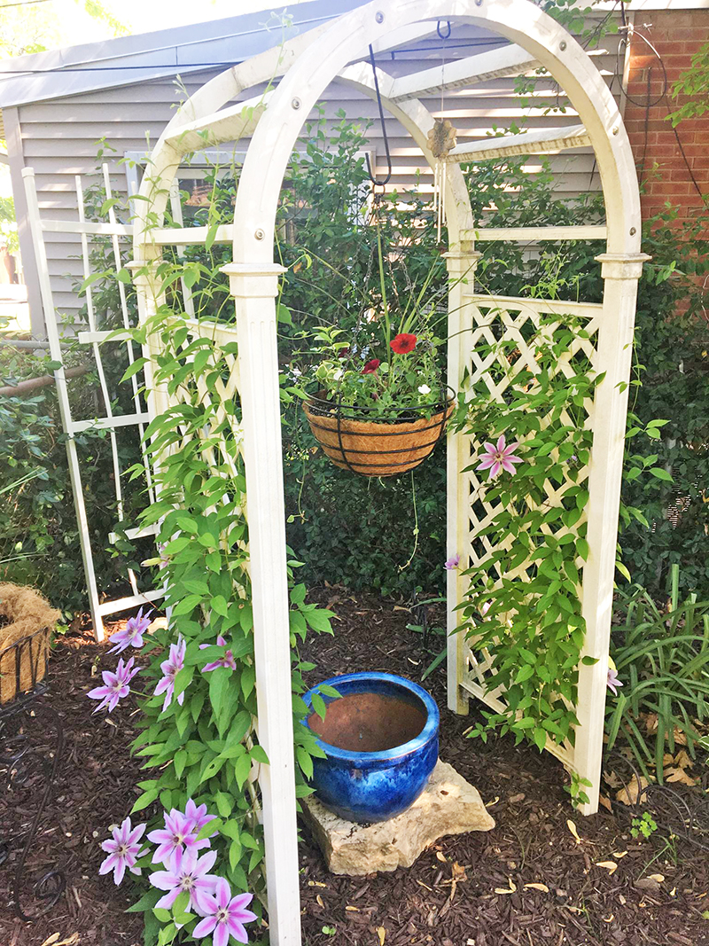 Trellises placed strategically around the yard help Steve Pesick grow a vertical garden and attract birds and bees. (Provided photo)