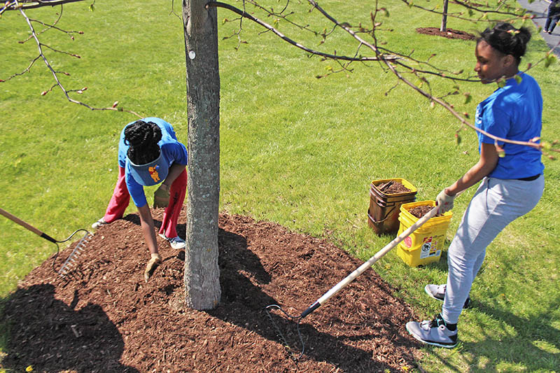 Spring is tree-planting time, and Flossmoor is giving residents an opportunity to add beauty and function to their property with new trees. (Chronicle file photo)