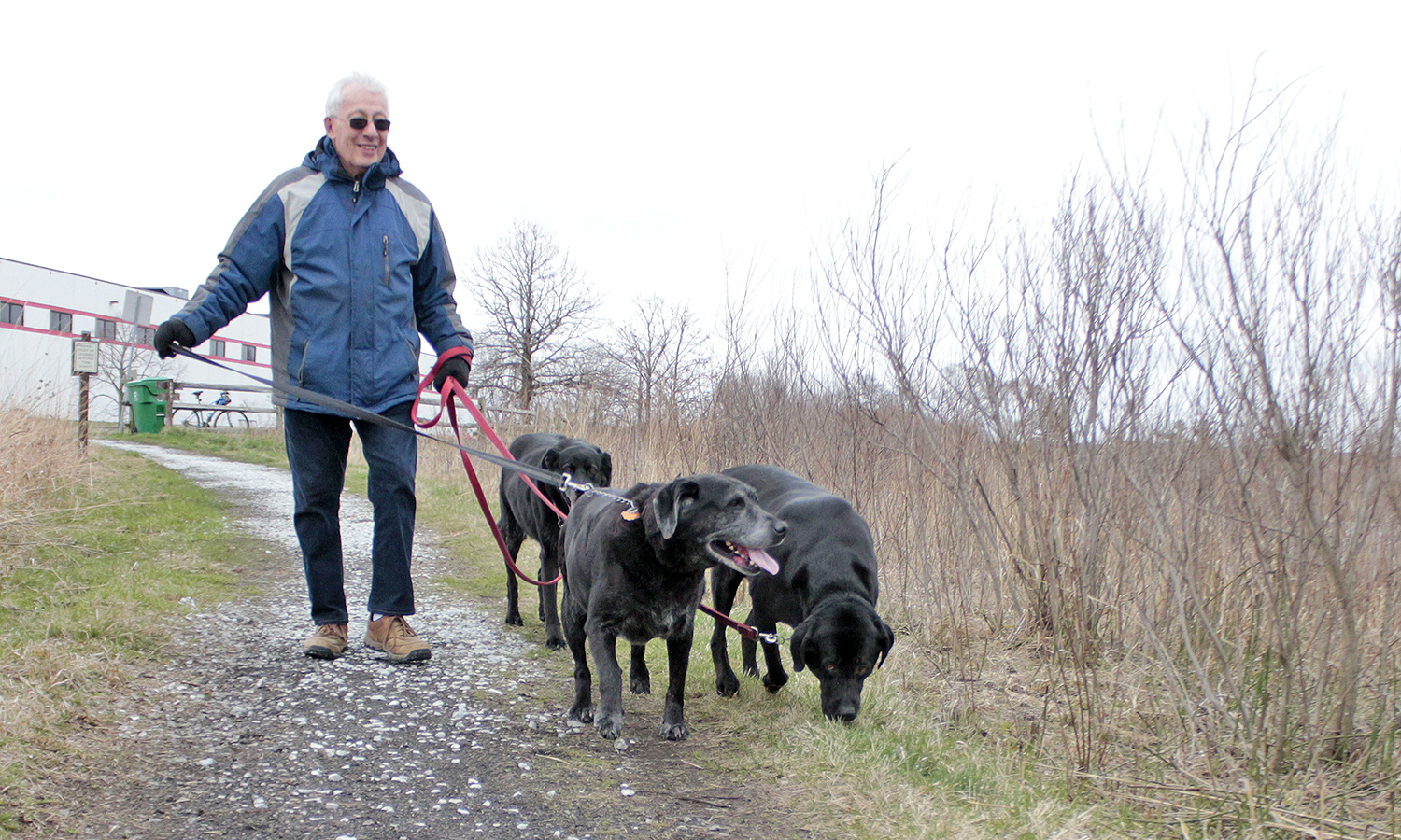 Homewood Mayor Richard Hofeld and crew take a walk in Izaak Walton Nature Preserve in early April. The Hofeld family recently increased with the addition of another black Labrador, Katie. (Eric Crump/H-F Chronicle)