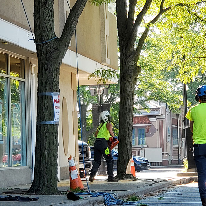 On Monday, July 26, a Homewood Public Works crew began removing trees around the former Triumph Building in preparation for demolition, which is expected to begin soon. (Eric Crump/H-F Chronicle)