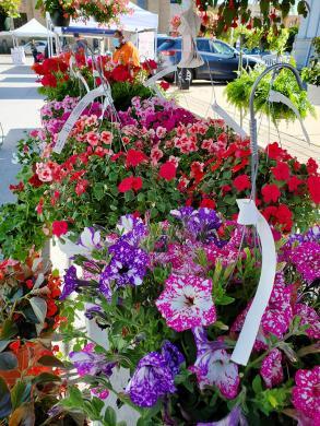Zeldenrust Farms major in flowers for the season opening market on Saturday. (EC)
