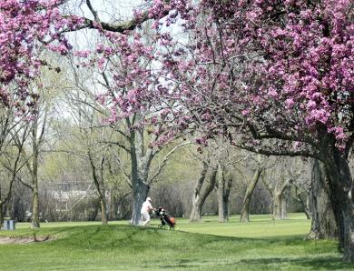 A golfer plays amid tree blossoms at Idlewild Country Club.