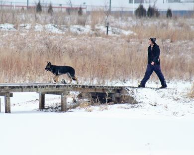 Dogs and people out for a stroll are a common site in the preserve.
