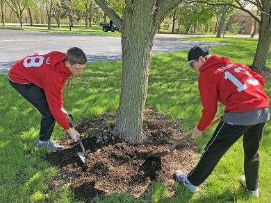 Spreading mulch at Lions Park were Homewood Baseball & Softball members Anthony Fanelli, left, and Jack Barry of Homewood. (MT)