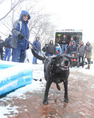 Annie arrives at the Mayor's Arctic Dip with her human, Mayor Richard Hofeld in tow.