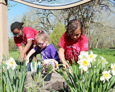 From left, Girl Scouts Joy Artis, Brin Fonner and Anaya Miller work to plant flowers at Indian Trails Park.