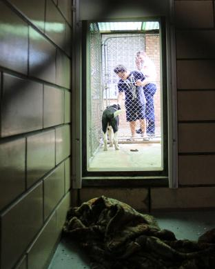 A view from inside the Homewood Adoption Center's kennel looking into the enclosed outdoor space. (EC)