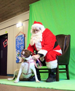 Old English bulldog Rosy poses with Santa Claus in Park Place during Winterfest in Flossmoor. Rosy was there with her human, Tom Hamilton of Homewood.