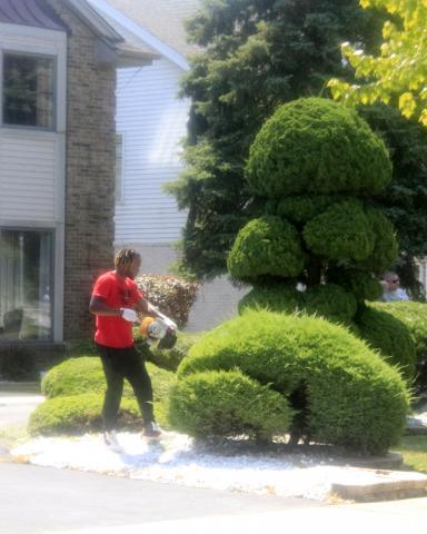 Sights along the way: A little topiary work.